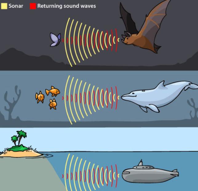 sóng siêu âm là gì